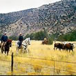 New Mexico Cattle Drives