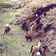 Utah Cattle Drives