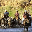 California Cattle Drives